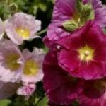 An Ode to the Cottage Garden