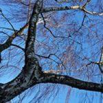 Tree TLC