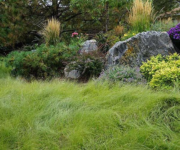 15 natural tranquil low maintenance landscape
